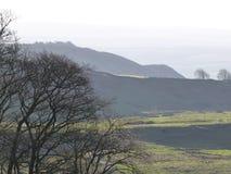 Plattelandslandschap met langzaam verdwenen heuvels en gesilhouetteerde bomen Stock Foto