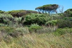 Plattelandslandschap met wilde installaties en bomen Royalty-vrije Stock Foto