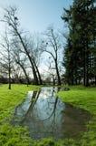 Plattelandslandschap overstroming in Engeland Stock Afbeelding