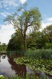 Plattelandslandschap van Engeland Stock Afbeeldingen