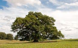 Plattelandslandschap van Herefordshire, Engeland Stock Foto's