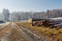Plattelandslandweg met houtgebieden en bomen dichtbij dorp Stock Afbeeldingen