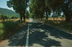 Plattelandsweg die door bomen opzij in de schaduw wordt gesteld royalty-vrije stock fotografie