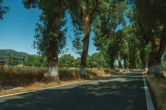 Plattelandsweg die door bomen opzij in de schaduw wordt gesteld royalty-vrije stock foto