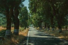Plattelandsweg die door bomen opzij in de schaduw wordt gesteld royalty-vrije stock foto's