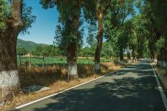 Plattelandsweg die door bomen opzij in de schaduw wordt gesteld royalty-vrije stock afbeeldingen