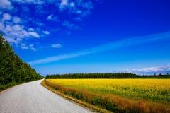 Plattelandsweg langs het gele gebied van de raapzaadbloem en blauwe hemel in landelijk Finland royalty-vrije stock fotografie