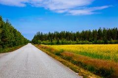 Plattelandsweg langs het gele gebied van de raapzaadbloem en blauwe hemel in landelijk Finland stock foto's