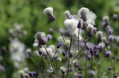Plattelandswildflowers Royalty-vrije Stock Afbeeldingen