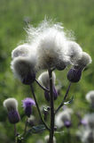 Plattelandswildflowers Royalty-vrije Stock Foto