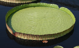platter ύδωρ στοκ εικόνες