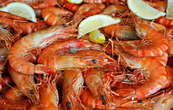 Platter fresh king prawns shrimps with lemon. Banquet platter of fresh king prawns with lemon wedges Stock Image