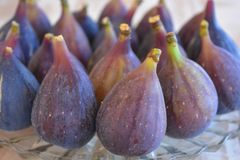 Freshly picked purple figs, ficus carica, on a glass plate royalty free stock photography