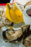 A platter of fresh organic raw oysters on ice. At restaurant Royalty Free Stock Photos