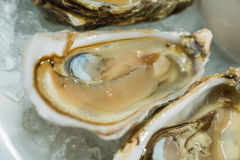 A platter of fresh organic raw oysters on ice. At restaurant Royalty Free Stock Images