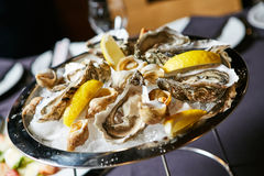 Platter of fresh organic raw oysters on ice. A platter of fresh organic raw oysters on ice at restaurant Royalty Free Stock Images