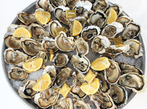 Platter of fresh oysters. A platter of fresh raw oysters on ice with butter and lemon quarters Royalty Free Stock Images