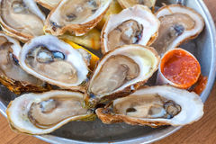 Platter of Oysters Royalty Free Stock Photography
