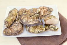 Platter of Oysters. Platter of Malpaque oysters with a oyster knife Royalty Free Stock Images