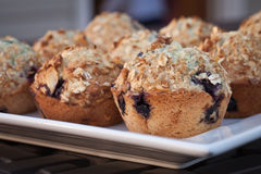 Platter of wholesome homemade blueberry muffins. Platter of homemade whole wheat blueberry muffins topped with oats and almonds Royalty Free Stock Photos