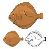 Plattfisch-Zeichentrickfilm-Figur der hohen Qualität umfassen flaches Design und Linie Art Version Stockfotos