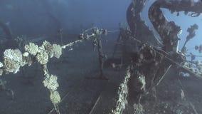 Plattform des versunkenen Schiffs Salem Express ruiniert unter Wasser auf Meeresgrund im Roten Meer stock footage