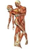 plattform kvinna för manmuskel Arkivfoto