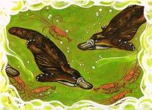 platties шаловливые Стоковая Фотография