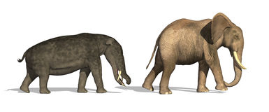 Platybelodon and Elephant Compared. Side by side comparison of a Platybelodon (a prehistoric ancestor of the elephant) and modern day elephant - 3D render Stock Images