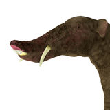 Platybelodon Head Royalty Free Stock Photo