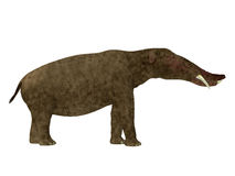 Platybelodon Side Profile Stock Images