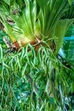 Platycerium przy zielonym drzewem zdjęcie royalty free
