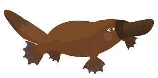 - platypus -被隔绝的动画片鹦鹉 免版税库存照片