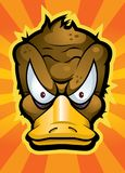 Platypus. An angry looking duck billed platypus Royalty Free Stock Photo