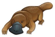 Platypus. Illustration of a platypus (Ornithorhynchus anatinus Royalty Free Stock Image