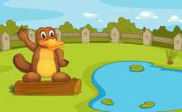 Platypus. Illustration of a platypus on a log Stock Photos