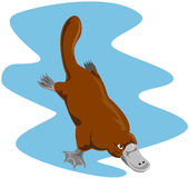 Platypus Royalty Free Stock Photography