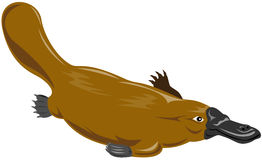 Platypus Royalty Free Stock Images