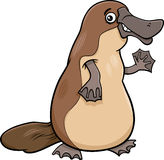 Platypus animal cartoon illustartion Stock Photos