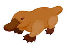 Platypus. Cute icon of platypus. Perfect card or any kind of design Royalty Free Stock Images
