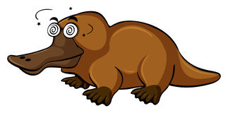 Platypus with dizzy face Royalty Free Stock Photos