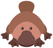 Platypus with happy face. Illustration Royalty Free Stock Photo