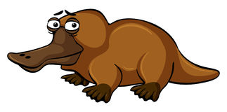 Platypus with sad face. Illustration Stock Photography