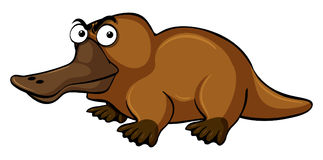 Platypus with serious face. Illustration Stock Photo