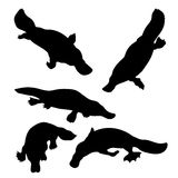 Platypus set vector. Platypus set of silhouettes vector vector illustration