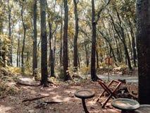 Platz, zum sich im Wald zu entspannen Lizenzfreie Stockfotografie