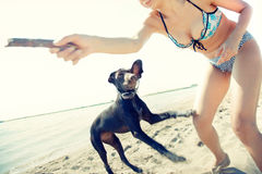 Play with dog royalty free stock photos