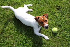Play with a dog Royalty Free Stock Photo