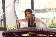 Play guzheng stock photo