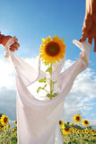 Play idea with sunflower in farm. Yellow sunflower with idea as it take a shirt Stock Image